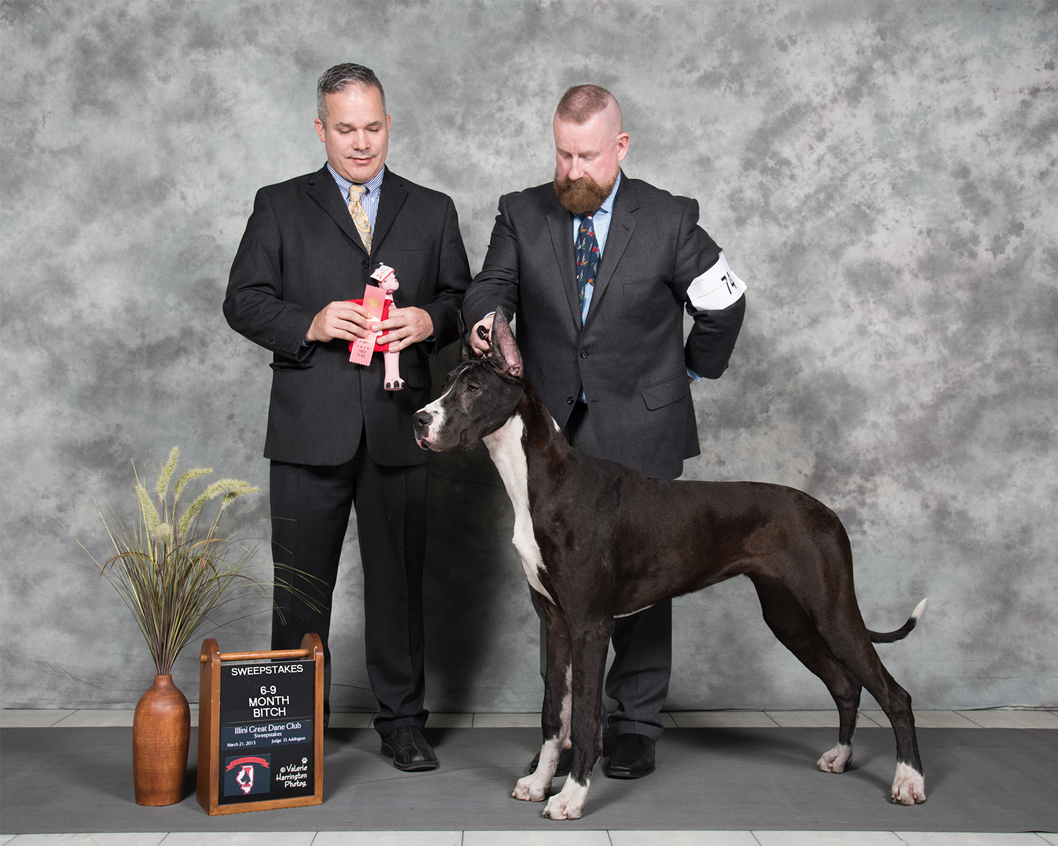 showing mantle great dane