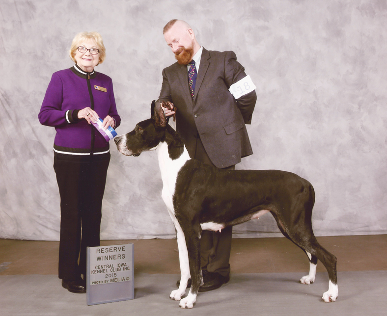 showing a great dane