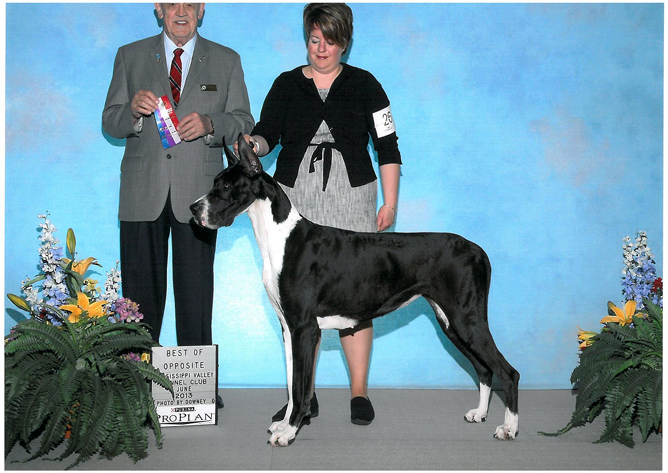 Show Mantle Great Dane