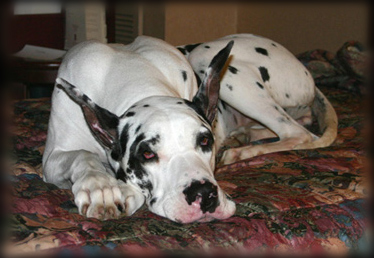 Harl Dane laying down - Skyy in Topeka