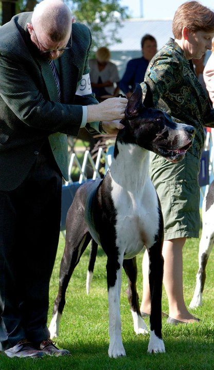 Mantle Dane in Bred-By Exhibitor Class