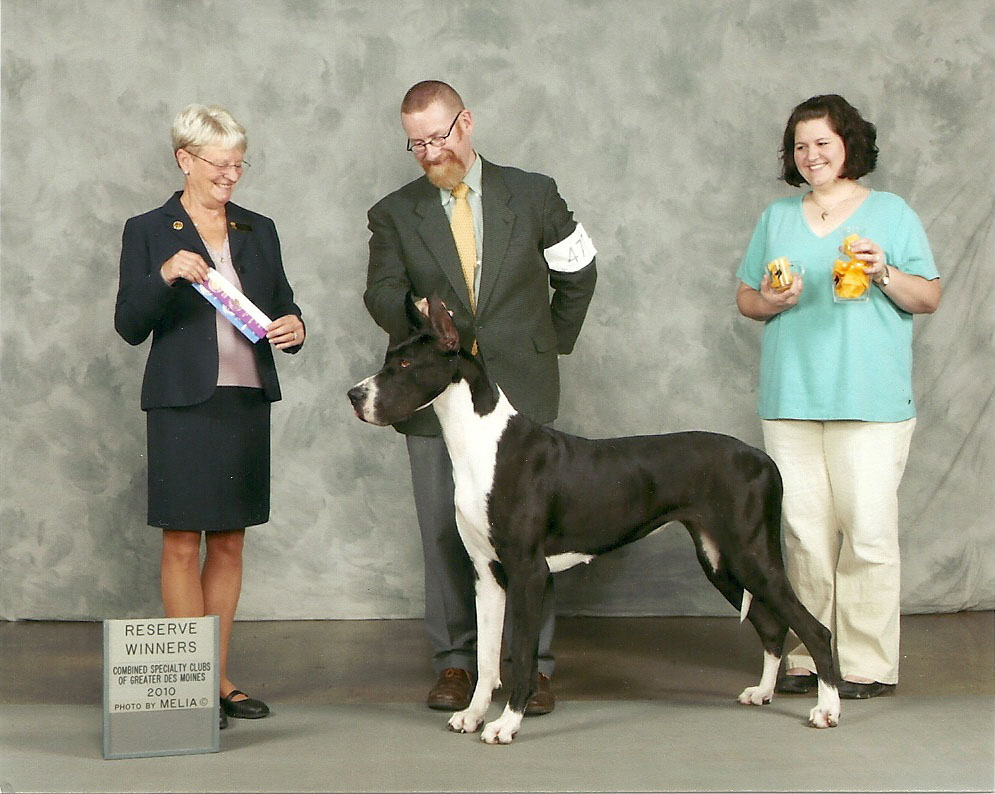 Mantle Great Dane 5 point major reserve