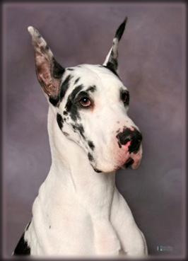 female harl Dane head study - Photo by Krisma Images