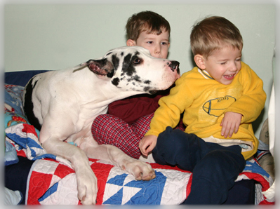 Great Dane and kids