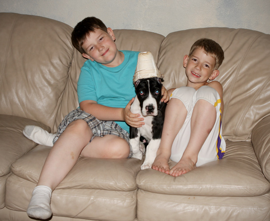 great dane puppy with kids